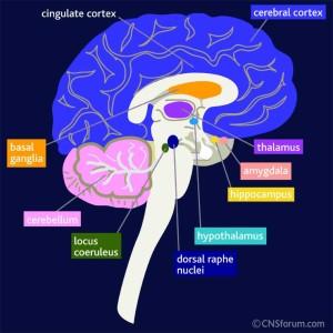 Anxiety, PTSD, peace of mind, brain, Dr. Amen
