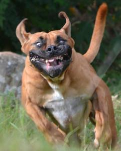 scary dog face